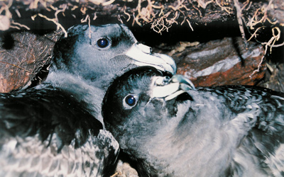 Seabird research 6